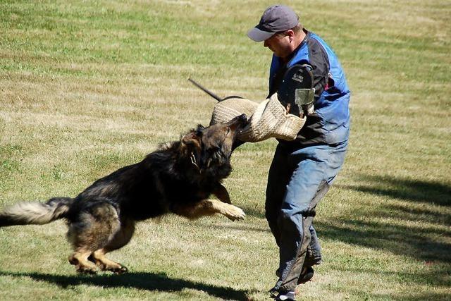 Hunde zeigen, wie sie mit Einbrechern umspringen