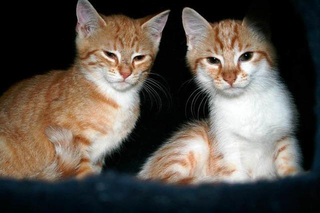 Katzenjammer bei Sommerhitze