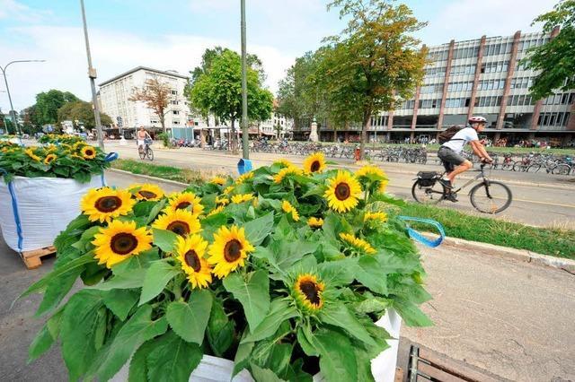 Freiburg hat seine Sonnenblumenallee