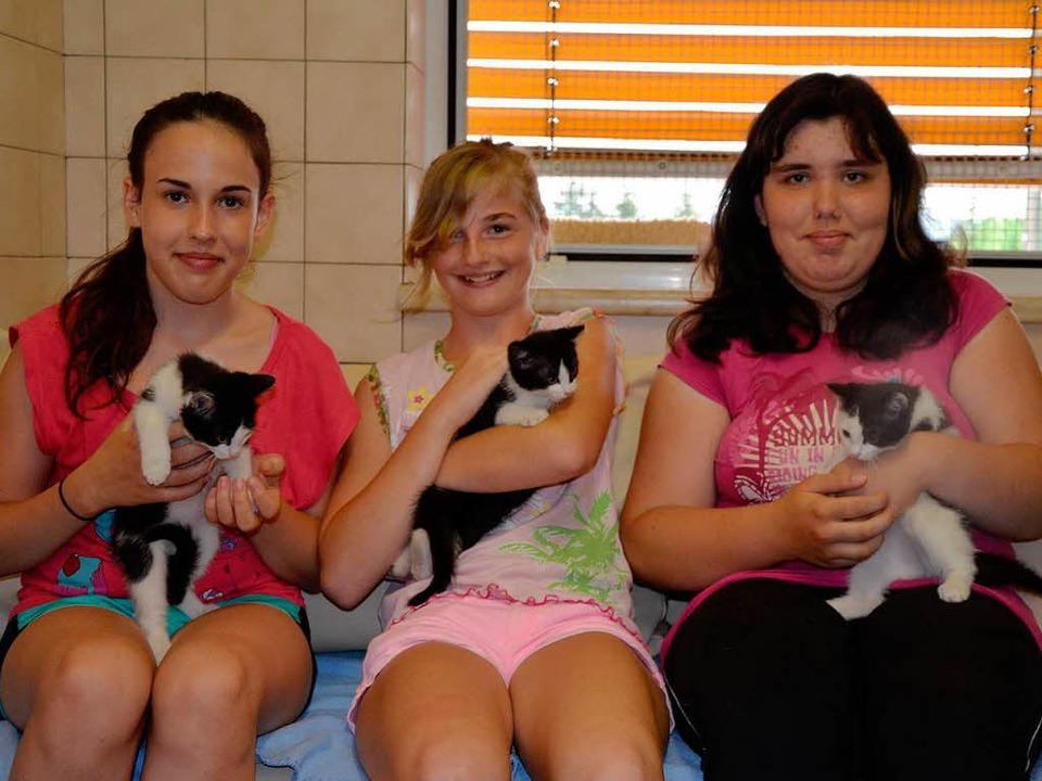 Die drei Fundkatzen, die kürzlich abge...ichen Helferinnen im Tierheim beliebt.  | Foto: Martina Proprenter