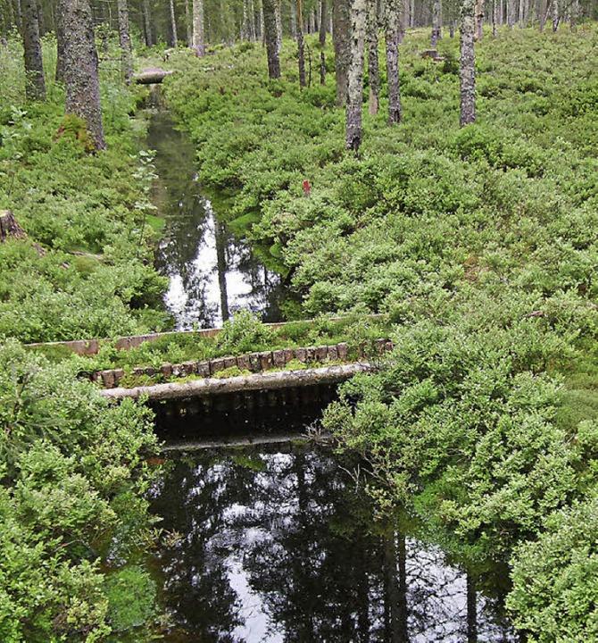Beim Einbau einer Wasserrückhaltesperr... 4300 Jahren ist sie bestens erhalten.  | Foto: Zapf, von Sengbusch