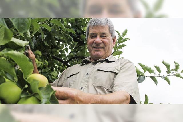 Äpfel gedeihen üppig, Kirschen gab es fast keine