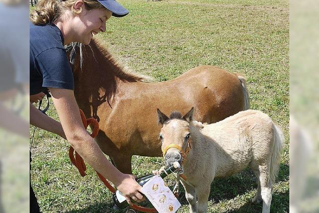 Ein Feiertag für Pferdefreunde