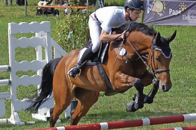 Pferde und Reiter geben ihr Bestes