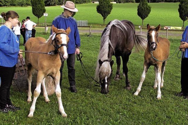Kleine Pferde ganz groß