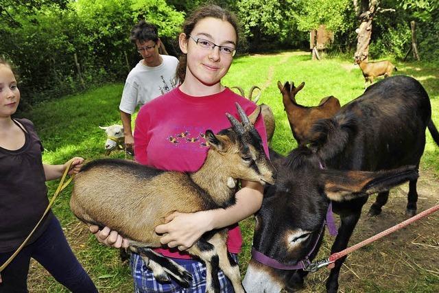 Kinder und Tiere kommen sich näher