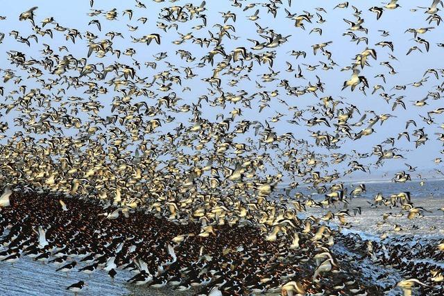 Ornithologische Verwandtschaften