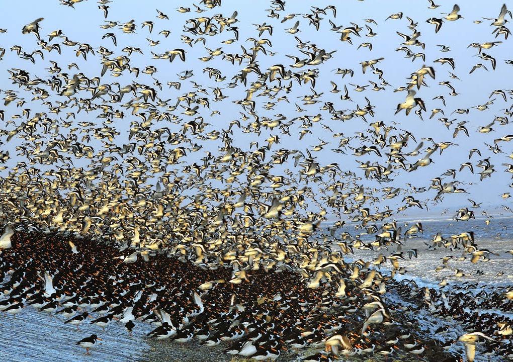 Allein unter Vögeln:  Uwe Timms Protag...nen Sommer eine Warte im Wattenmeer.    | Foto: dpa