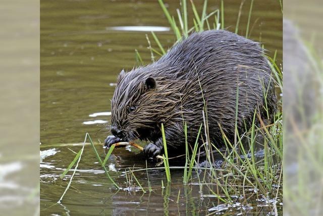 Artenvielfalt soll erhalten bleiben