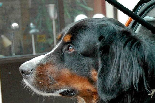 Tierschützer befreien Hunde aus überhitztem Wohnmobil