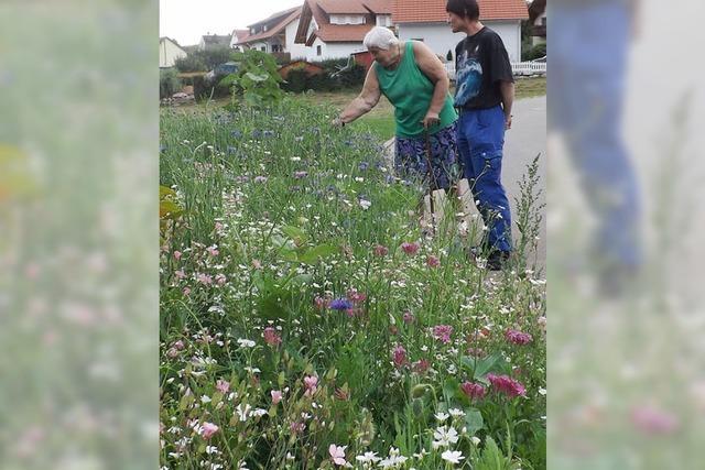 Auf der Verkehrsinsel blühen jetzt Wildblumen