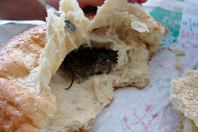Kontrolleure entdecken Kot im Kuchen und Scherben in der Pasta