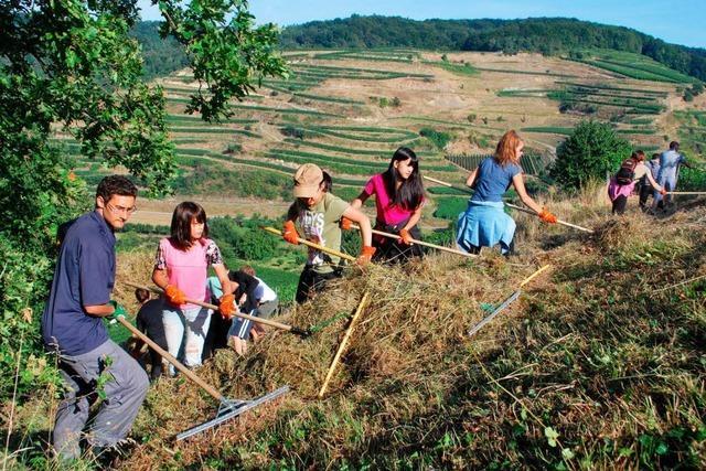 Jugendliche aus 10 Ländern pflegen am Badberg die Natur