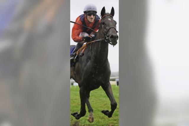 Exzellente Pferde, hochklassiger Sport