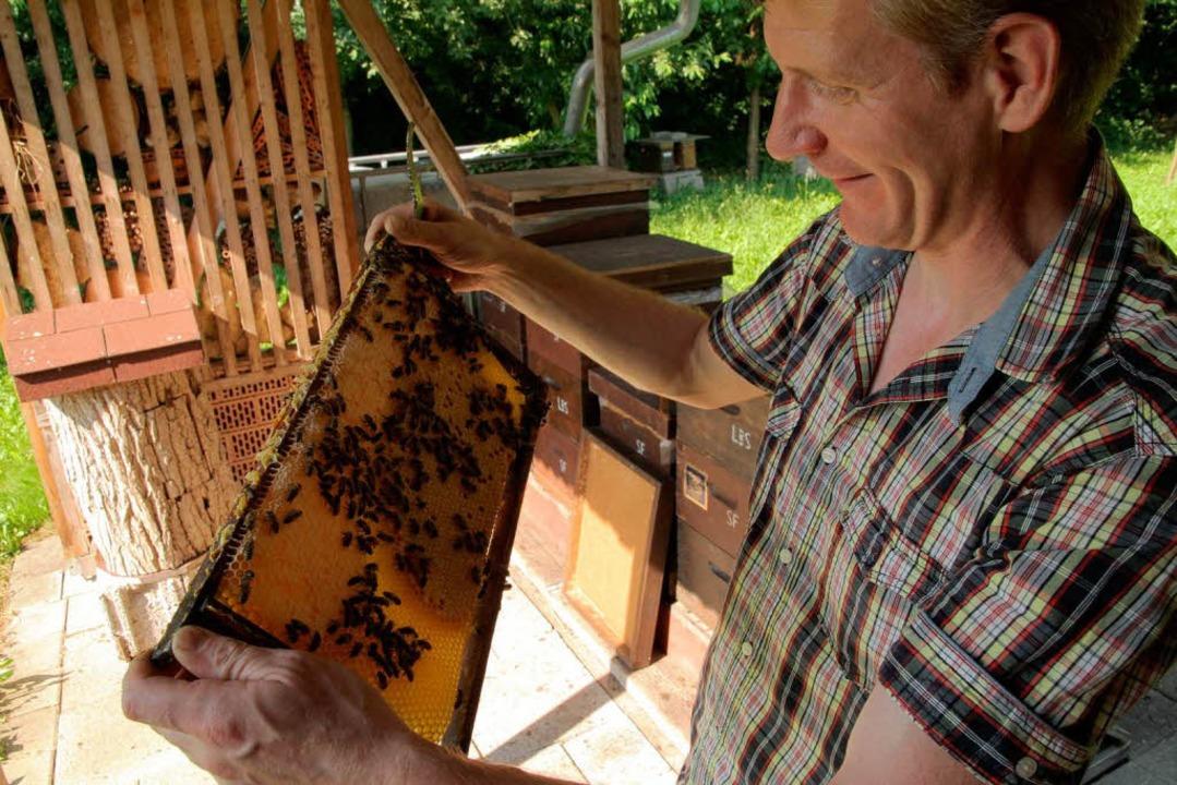 Bloß keine schnellen Bewegungen, wenn ...n Friederich mit seinen Bienenvölkern.  | Foto: Thilo bergmann