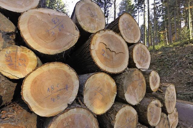 Forstverwaltung jagt Holzdiebe via Satellit