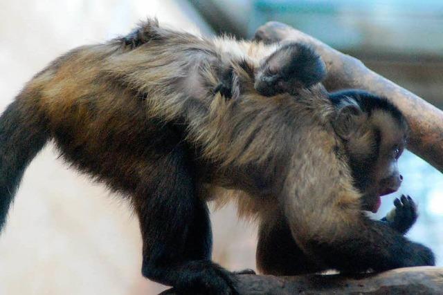 Der Tierpark Lange Erlen entwickelt sich weiter