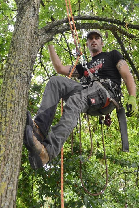 Baumpfleger Danny Maisenhelder; Suche ...ischem Laubholzbockkäfer im Rheinhafen  | Foto: Michael Gilg