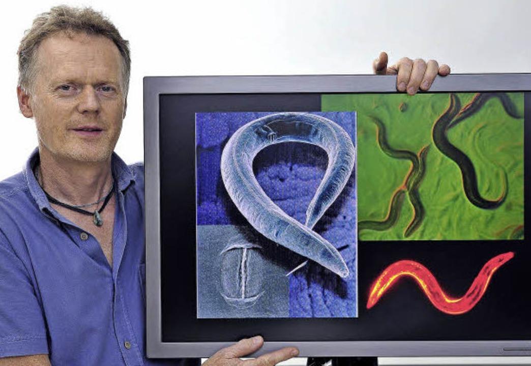 Genetisch ist C. elegans unser enger V... Das versucht Ralf Baumeister  nutzen.  | Foto: thomas kunz