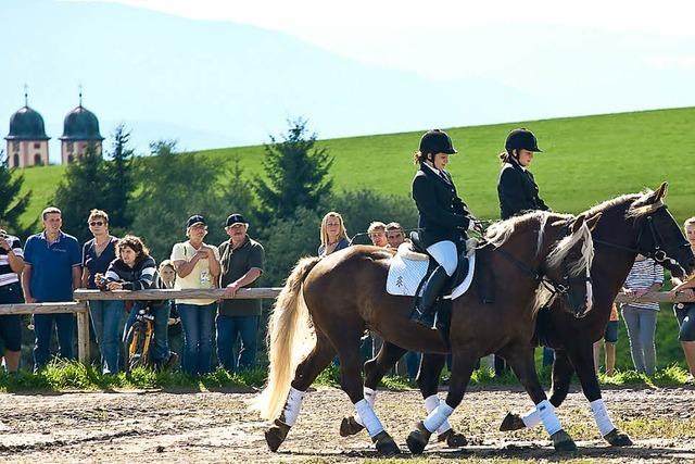 Aufs richtige Pferd gesetzt: Von Schwarzwälder Rössern und Reitern