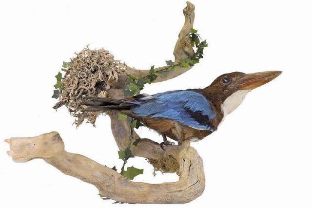 Die Exotik macht den Vogel zum Museumsstück