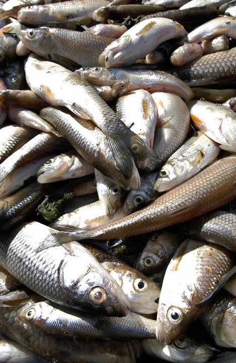 Hunderte Fische sind in der Brigach verendet (Symbolbild).    Foto: Michael Bamberger