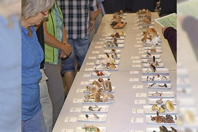 Ausstellung heimischer Pilze