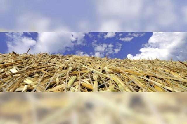 Getreideernte wirft weniger Erlöse ab