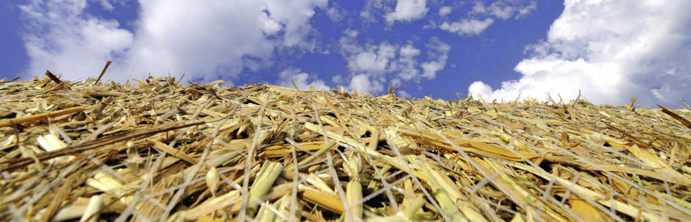 Abgeerntet: Die Getreideernte verlief ...den Ergebnissen des Vorjahres 2012.     | Foto: Siegfried gollrad