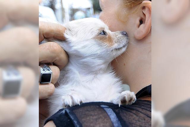 Tierheim soll mehr Geld bekommen