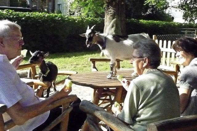 Tiere fördern neuen Lebensmut