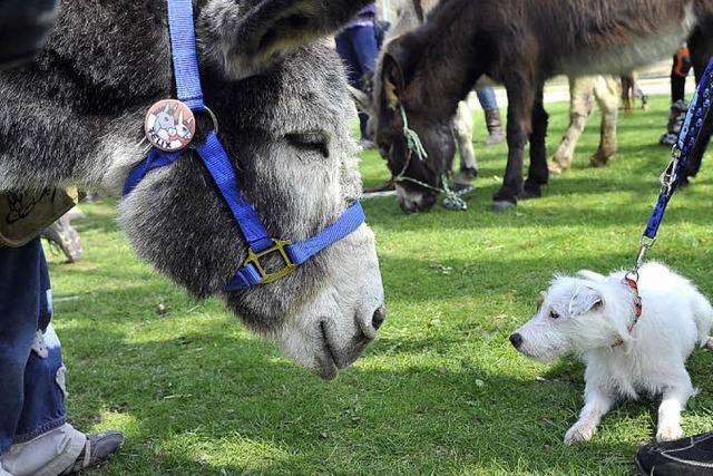 Eselei auf dem Mundenhof
