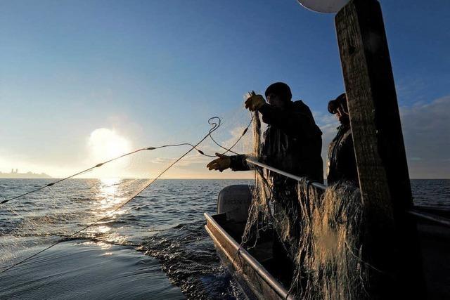 Berufsfischer: Kläranlagen sollen weniger stark filtern