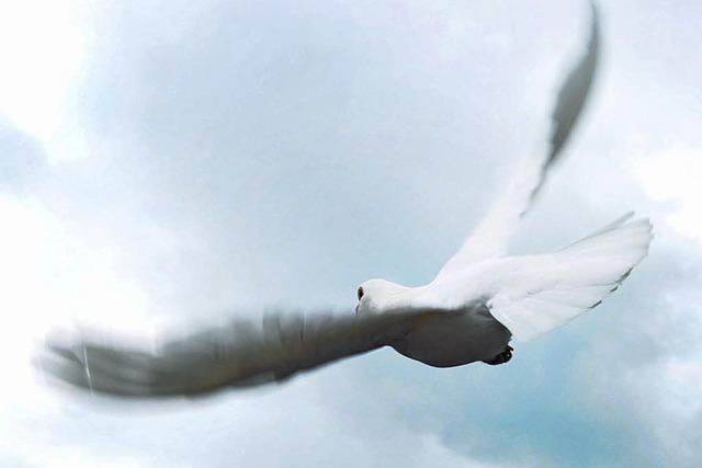 Weiße Tauben im Visier