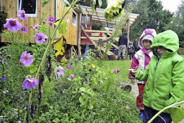 Waldwiesel erkunden Wald und Wiese