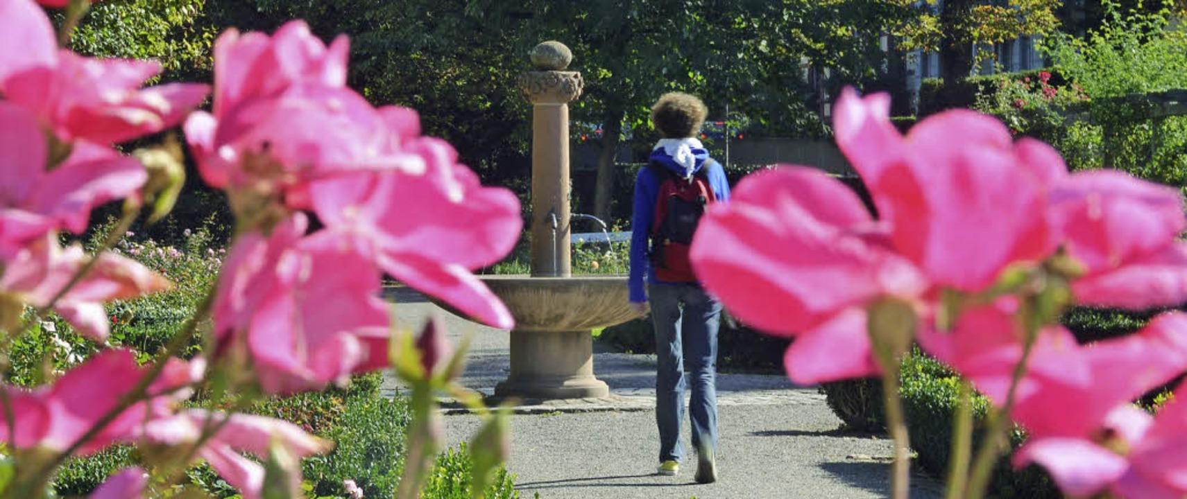 Der Rosengarten an der alten Stadtmaue... Erneuerung ab Frühjahr 2014 fließen.     Foto: Helmut Seller