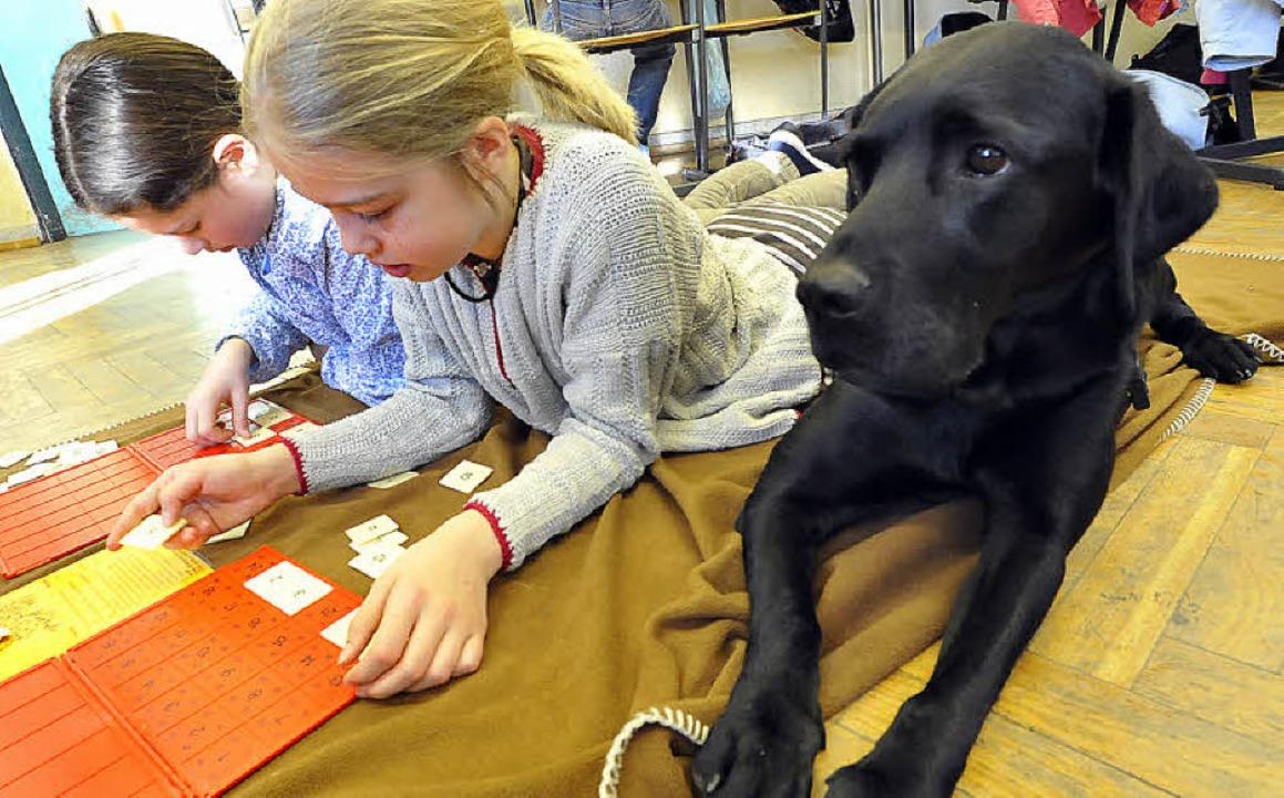 Ein Hund in einem Klassenzimmer kann Teil eines pädagogischen Konzeptes sein.   | Foto: Ingo Schneider