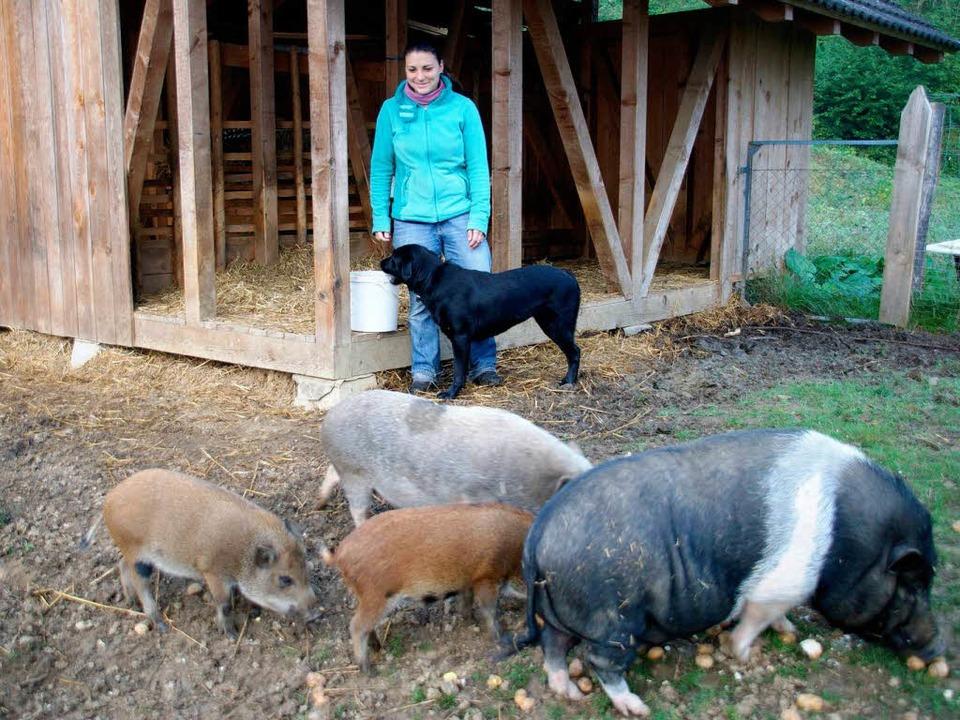 schwein mensch hybrid