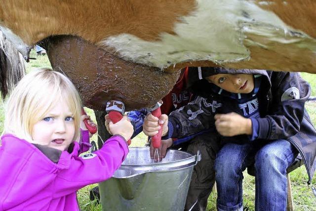 Das Fest, wo Milch und Honig fließen