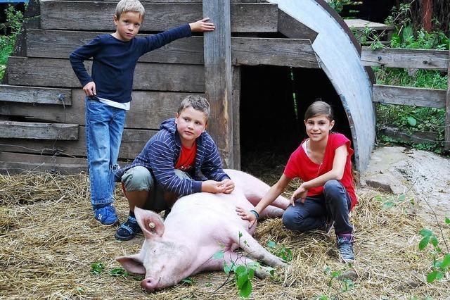 Schwein gehabt auf dem Öko-Hof