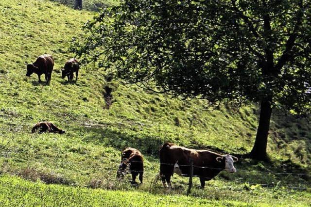 Karges Gras hat die Weidezeit verkürzt