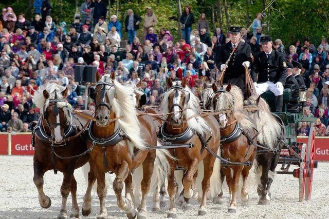 Hengstparade in Marbach: 25000 Besucher sind mit dabei
