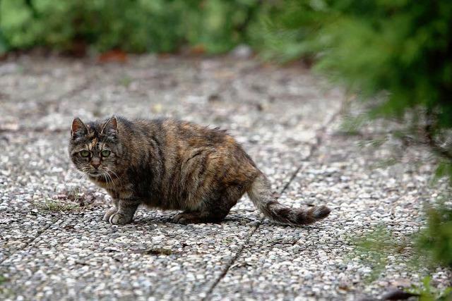 Verwilderte Katzen vermehren sich unkontrolliert