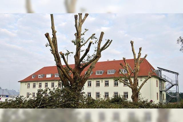 Um jeden Baum wird diskutiert