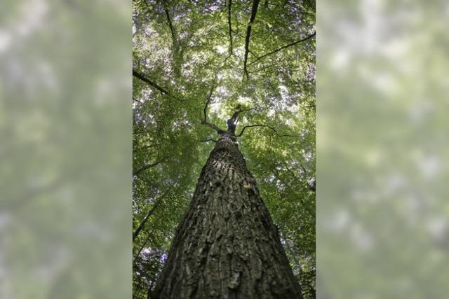 Kein Interesse an deutschem Holz