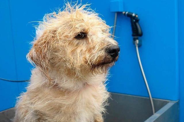 Hund Schlabbe testet ersten Hundewaschplatz in Kehl