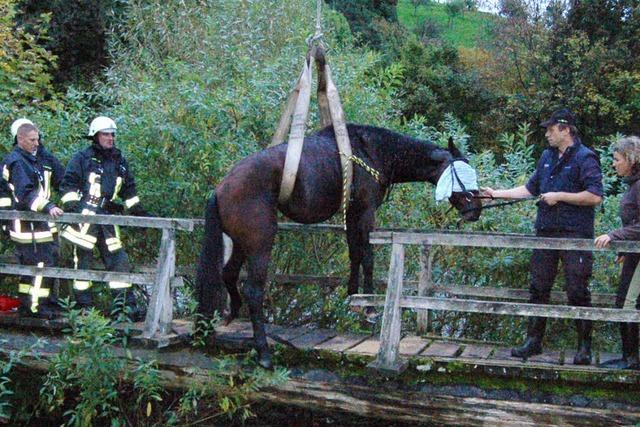 Rettung fürs Pferd
