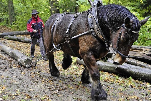 Waldhaus Freiburg: Holzarbeit mit einer Pferdestärke