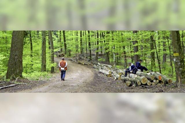 Stadtwald: Ohne Pflege geht es nicht