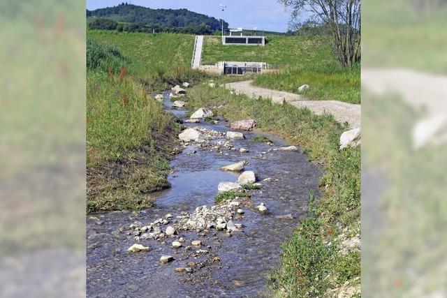 Haushaltsjahr 2012 war für Vogtsburg besser als erwartet
